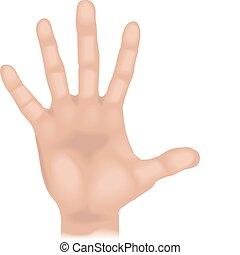 hand Illustration - An illustration of a human hand, no...