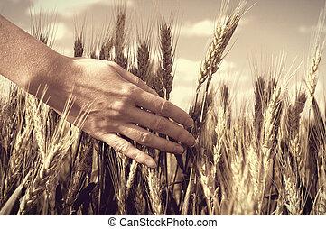 hand in a wheat field