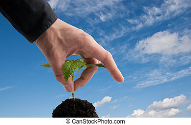 hand in business shirt picking a young plant