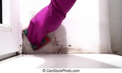 hand in rubber glove washes wall from black mold. dangerous fungus