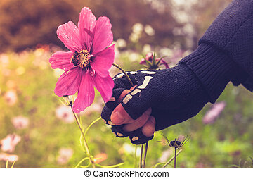 Hand in skeleton glove is violently grabbing flower with bee