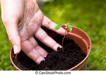 hand in soil, spring gardening