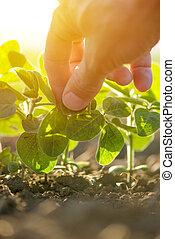 Hand in soybean field