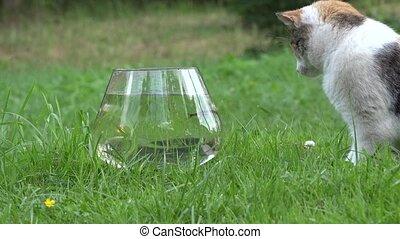hand let fish in aquarium with water and cat pet catch animal. Closeup. 4K