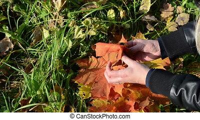 hand make flower leaves