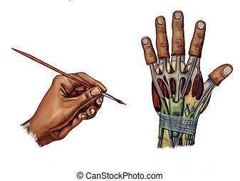 carpal tunnel syndrome - hand medical illustration about the...