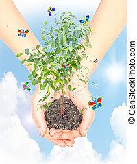 hand, met, een, plant