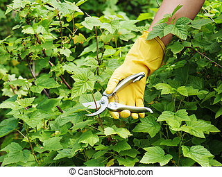 hand, mit, grün, pruner, in, der, garden.