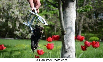 hand mole trap - Gardener hand hold metal trap tool with...