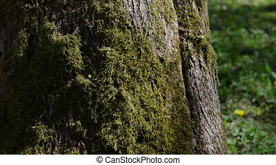 hand moss tree trunk