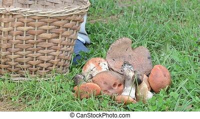 hand mushroom basket