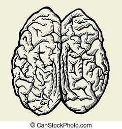 hand, oavgjord, vektor, mänskligt förstånd