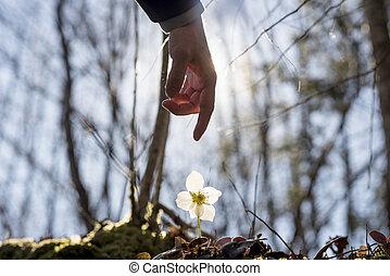 Hand of a man above a wild flower
