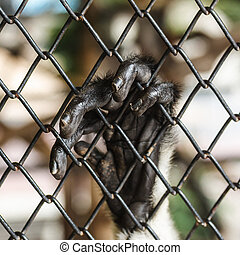 HAND OF A MONKEY IN A CAGE