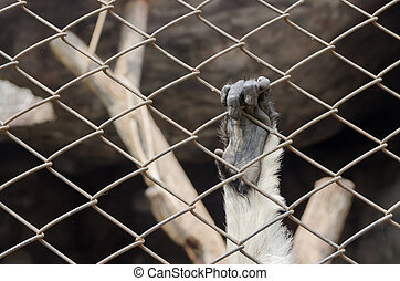 Hand of chimpanzee in the cage.