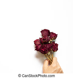 Hand of holding dry red rose flowers on white background. top view, copy space