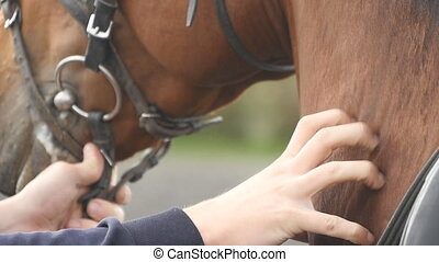 Hand of man stroking neck of horse. Arm of male jockey...