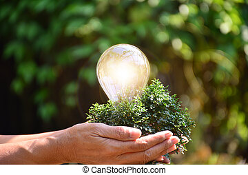 Hand of person holding light bulb and tree for idea or success or solar energy
