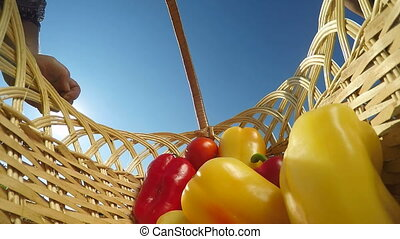 bell peppers in wicker basket - Hand of senior woman putting...