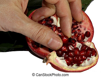 hand of the farmer who collects the seeds of ripe...