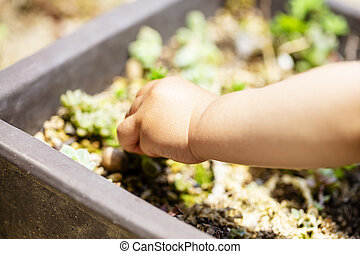 hand of the small child has the plant in the potted plant.