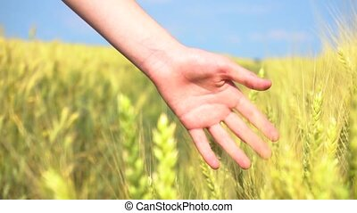 Hand of woman touching cereal grass - Hand of woman touching...