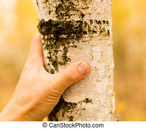 hand on a birch tree in autumn