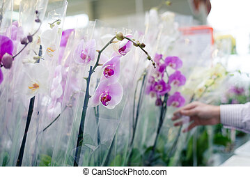 Hand on flower plant choosing and buying beautiful orchids in garden department supermarket on the shopping store background
