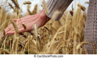 hand over wheat