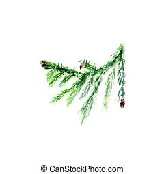 Hand painted fir twig. Green branch with broun cones