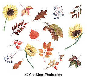 Hand painted watercolor illustration. Set with sunflowers, autumn leaves and berries