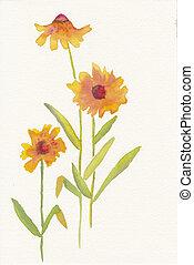 hand painted watercolor of three orange daisies