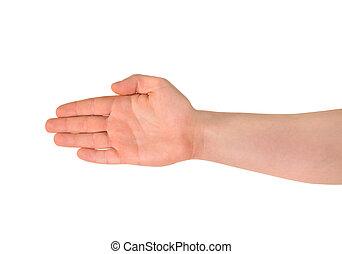 hand, palm, vrijstaand, gebaar, geopend