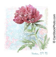 hand, peony, watercolor, getrokken, rode bloem