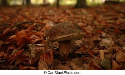 Hand picking a giant mushroom