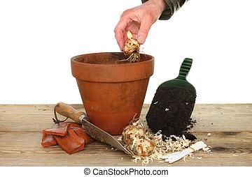 Hand planting bulb