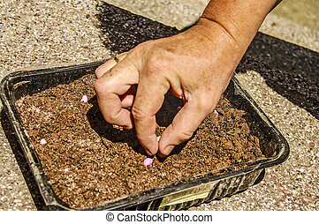 Hand planting seeds