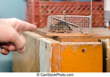 hand pointing to a mouse in a mousetrap