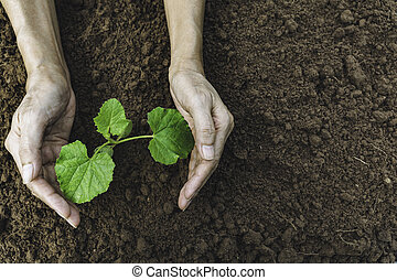 Hand protecting a green young plant with growing in the soil on blurred background.