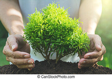 Hand protecting a green young plant with growing in the soil on nature background.