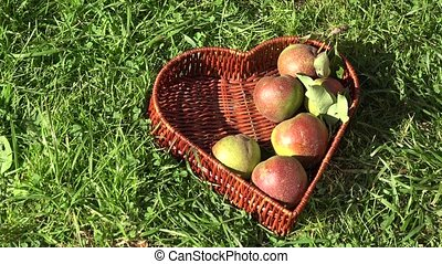 Hand putting pear fruits to wicker heart shape dish in summer orchard garden. 4K
