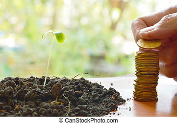 hand puttung gold coin arrange and little plant in dirt on wooden board