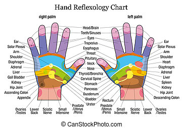 Hand reflexology chart description - Hand reflexology chart...