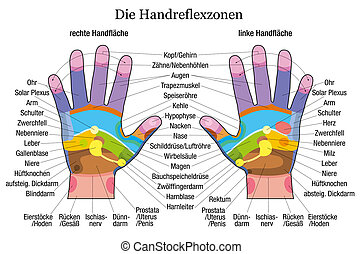 Hand reflexology chart with accurate description of the corresponding internal organs and body parts. German labeling! Vector illustration over white background.