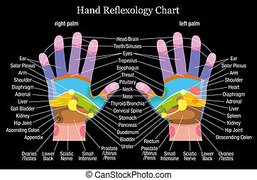 Hand reflexology chart with accurate description of the corresponding internal organs and body parts. Vector illustration on black background.