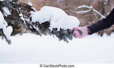hand shaking snow from fir branch in winter forest