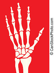 hand skeleton - silhouette skeleton hand on a red background