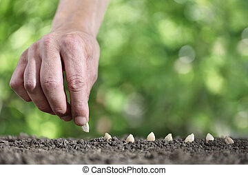 hand sowing seeds in the vegetable garden soil, close up on green background