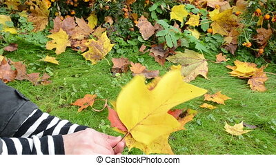 hand take autumn leaf