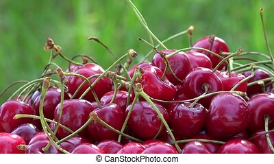 Hand take ripe cherry berries on sunlight in garden. Rotating turntable
